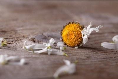Risultati immagini per immagini fiori appassiti