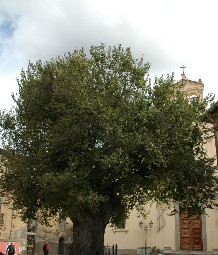 San Lorenzo-L'olmo